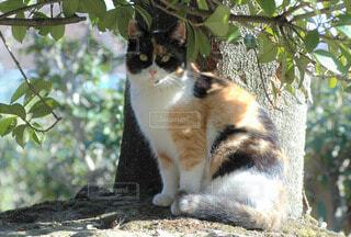 猫の写真・画像素材[56580]