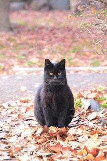 猫の写真・画像素材[56588]