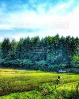 自然の写真・画像素材[57988]