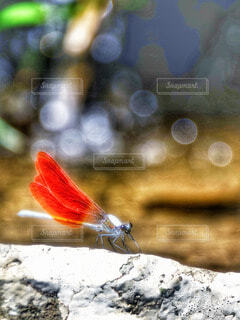 自然の写真・画像素材[57990]