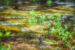 自然の写真・画像素材[57992]