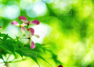 自然の写真・画像素材[72903]