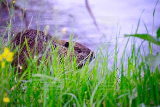 野生動物の写真・画像素材[129891]