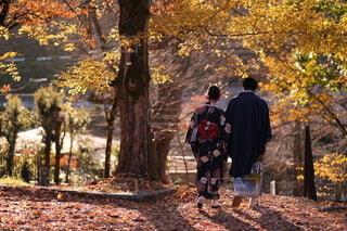 着物を着たカップルと紅葉の写真・画像素材[3893104]