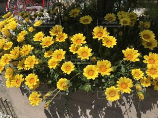 花壇の花の写真・画像素材[1630063]