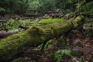 雨上がりの西沢渓谷の写真・画像素材[1787865]