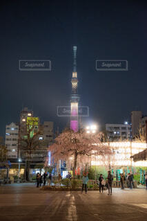 春の浅草×枝垂れ桜と東京スカイツリーの写真・画像素材[2039107]