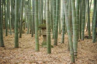 秋の鎌倉の写真・画像素材[2157719]