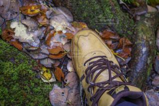 秋の海沢渓谷の写真・画像素材[2160318]