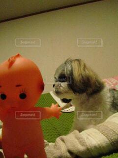 動物のぬいぐるみの上に座っている犬の写真・画像素材[1635874]