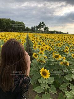 黄色の花の女性の写真・画像素材[1619696]
