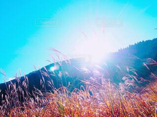 太陽とススキの写真・画像素材[1632472]
