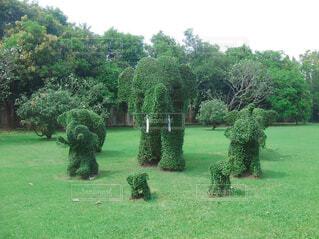象の植木の写真・画像素材[1632999]
