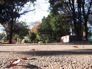 冬に近づく秋の道の写真・画像素材[1638081]