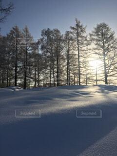 雪の中の朝日の写真・画像素材[1633548]
