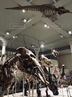 化石とかの写真・画像素材[1726581]