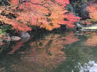 池に映る紅葉の写真・画像素材[1650769]