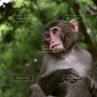 猿の写真・画像素材[55985]