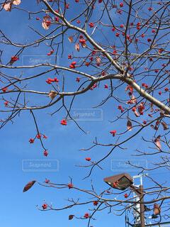 秋の空の写真・画像素材[1634390]