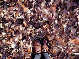 落ち葉と靴の写真・画像素材[1663007]