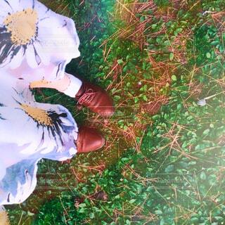 近くの花のアップの写真・画像素材[1691908]