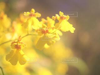 黄色の花の写真・画像素材[1716274]