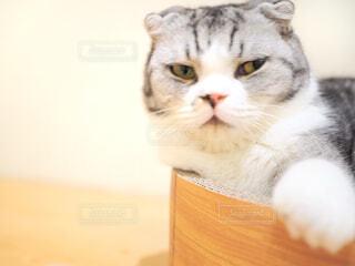 猫の写真・画像素材[1760507]