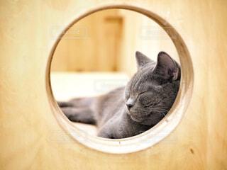 猫の写真・画像素材[1760511]