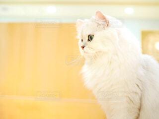 猫の写真・画像素材[1760548]