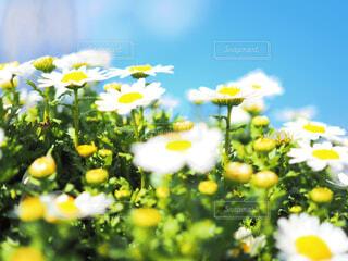 青空とお花の写真・画像素材[1858175]