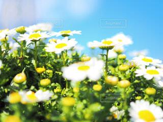 青空とお花の写真・画像素材[1858176]