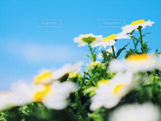 青空とお花の写真・画像素材[1858177]
