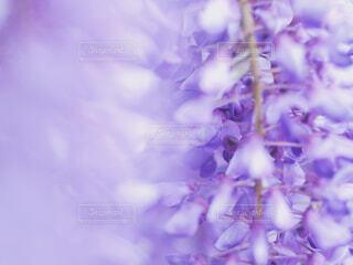 花の写真・画像素材[2075093]