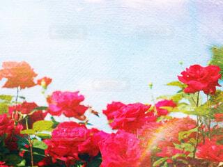 薔薇の写真・画像素材[2144739]