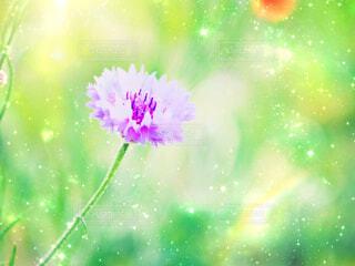 お花の写真・画像素材[2212490]