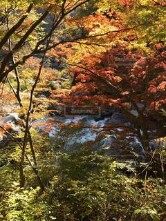 昇仙峡の紅葉の写真・画像素材[1635029]