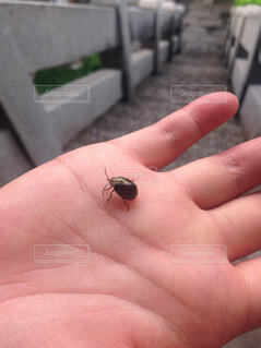 台湾のムシの写真・画像素材[1637379]