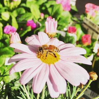 近くの花のアップの写真・画像素材[1640084]