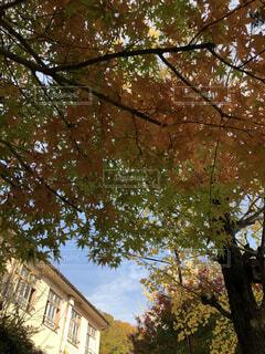 近くの木のアップの写真・画像素材[1636554]