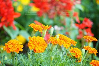 近くの花のアップの写真・画像素材[1641831]