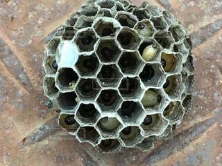 蜂の写真・画像素材[141255]