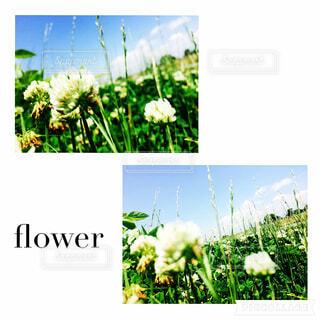 flowerの写真・画像素材[1637233]