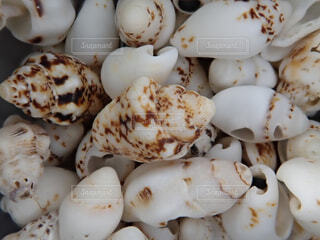 巻き貝の写真・画像素材[1725340]