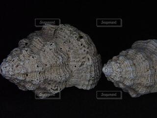 巻き貝の殻の写真・画像素材[1850645]