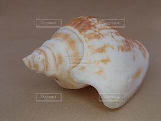 巻き貝の写真・画像素材[2170863]