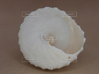 巻き貝の写真・画像素材[2170864]
