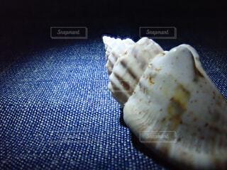 巻貝の写真・画像素材[2290332]