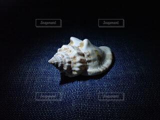 巻貝の写真・画像素材[2290334]