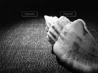 巻き貝の写真・画像素材[2290340]
