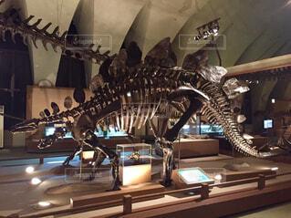 ステゴサウルスの写真・画像素材[1799488]